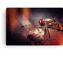I couldn't come any closer.... Canvas Print