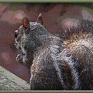 Fuzzy Waszy by George  Link