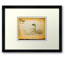 Pea Framed Print