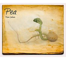 Pea Photographic Print
