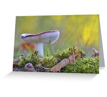 Russula undulata  Greeting Card