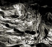 Driftwood Close-Up by Bob Wall