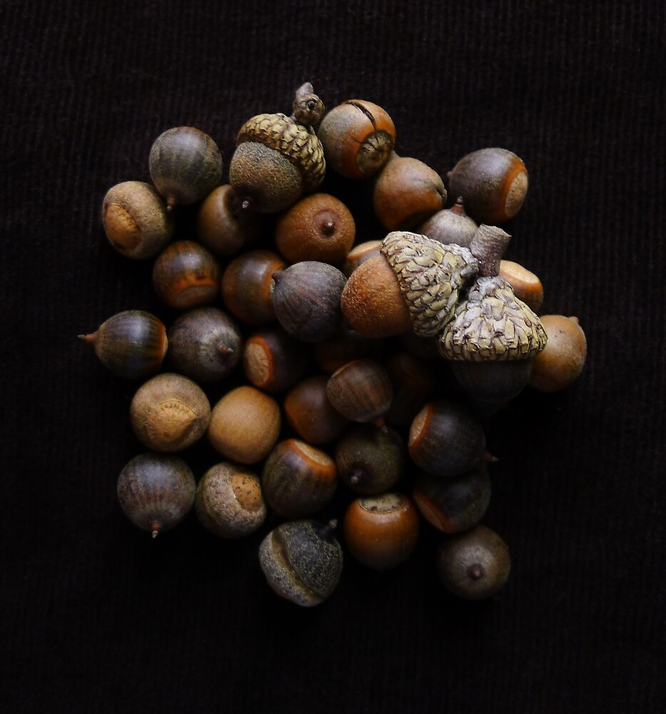 Acorns for the Winter by Barbara Morrison