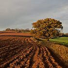 Furrows and field by peteton