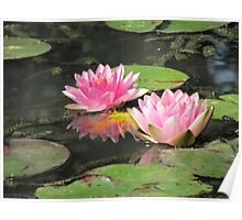 Two Water Lilies Poster