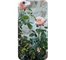 Roses in a stone wall in the background iPhone Case/Skin