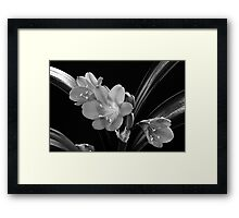 Mother's Clivia Lily Framed Print