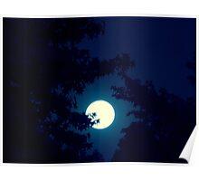 Moonlit Night   ^ Poster