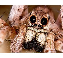 Wolf spider cute face Photographic Print