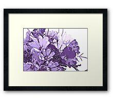 Summer Cosmos In Purple  Framed Print