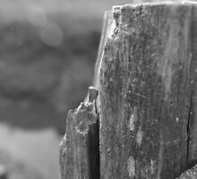 Fence by the Seaside by blaggers