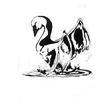 Swan Splash Photographic Print