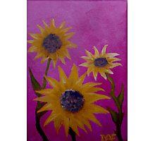 Sunflower Trio  Photographic Print
