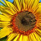 Another Sunny Delight  by lorilee