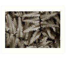 Silvery Ferns Art Print