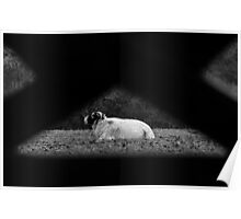 Sheep In A Triangle Poster