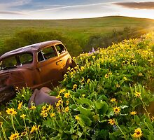 Rusted Car In Flowers by lkamansky