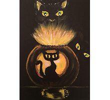 Black Cat Glow Photographic Print