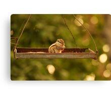Swinging Squirrel  Canvas Print