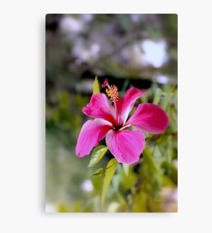 Bahamian Flower Canvas Print