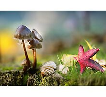 Autumn splendour Photographic Print