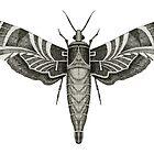 Moth by Jeno Futo