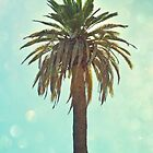 California Palm by LawsonImages