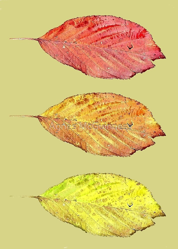 Falling leaves by Agnes McGuinness