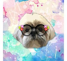 Shih tzu dog 2 Photographic Print