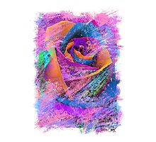 Love Is A Rose Photographic Print