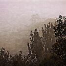 Mount Ainslee in the Fog (1) by Wolf Sverak