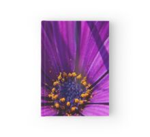 Purple African Daisy Close Up Hardcover Journal