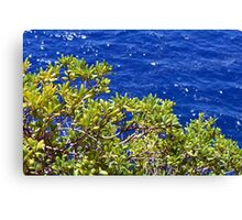Green leaves tree and the blue sea Canvas Print
