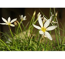 flower hour Photographic Print