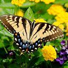 Flutter by Breanna Kane