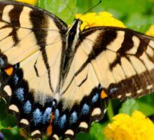 Flutter Sticker