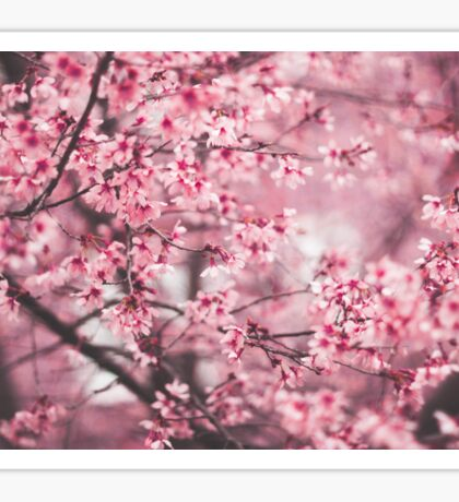 Spring Blossoms Sticker