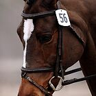 Dressage Horse Concentration   by Oldetimemercan