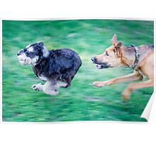 Dogs playing Poster