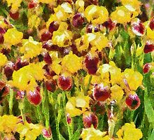 Yellow & maroon Irises - painted by PhotosByHealy