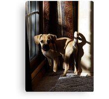 Puggle Dog Portrait Canvas Print
