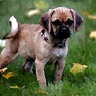 Puggle Puppy Dog Portrait by Oldetimemercan