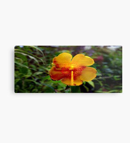 Sunset Flower. Metal Print