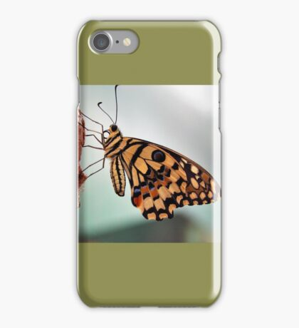 Citrus Swallowtail iPhone Case/Skin