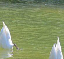 No more Swan Lake this season, please Sticker