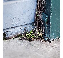 { Corners: where the walls meet #15 } Photographic Print