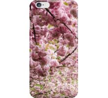 Cherry blossoms in Milan, Italy iPhone Case/Skin