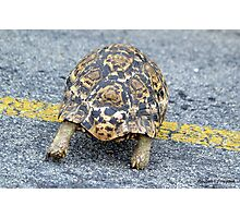 Slow and steady wins the race. Photographic Print