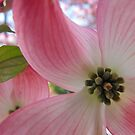 dogwood by endomental Artistry