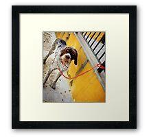 El Perro en Espana Framed Print